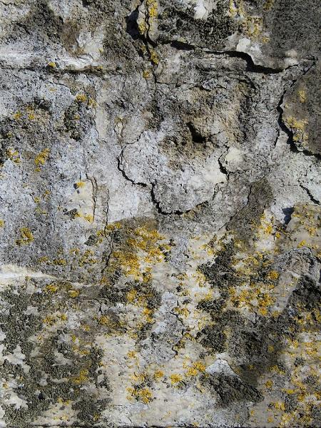 Fassadenfarbe gegen Pilzbefall
